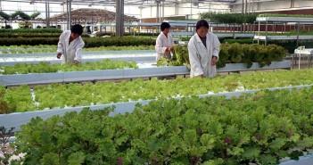 哪泥 ~ 世界上首創機器人農場,將於 2017 年於日本誕生
