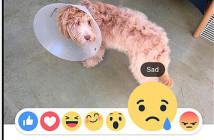 臉書不喜歡按讚?不妨來試試 Facebook 新推出六個新按鈕